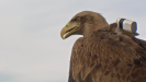 eagle-with-cam-on-back-nahled1.png